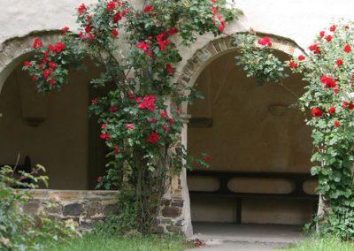 Rosen am Kreuzgang
