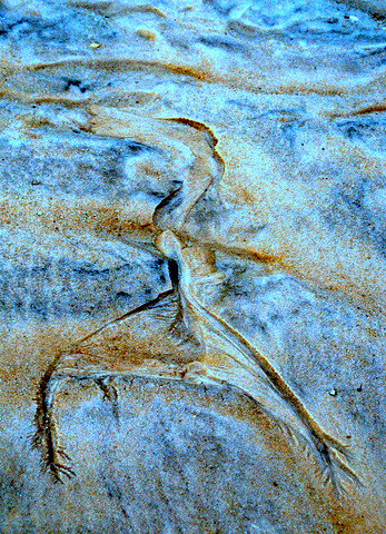 """""""Auftanzen in der Schöpferkraft"""" Fotografie, Atelier hestia, Sandmuster am Strand von Sylt 2012"""