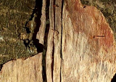 Farben, Formen und Linien im Holz