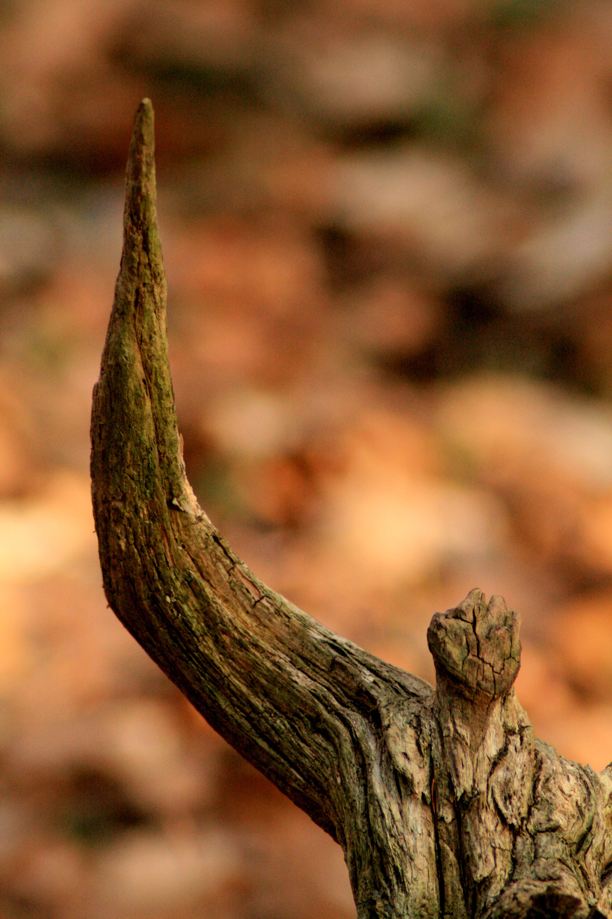 Fundholz erhobener Arm